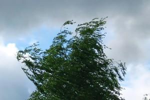 ветер лето